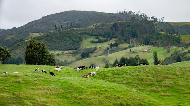Hermosa foto de un campo verde con hervidor de agua pastando la hierba y hermosas colinas Foto gratis