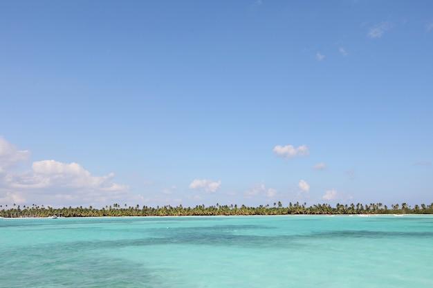 Hermosa foto del mar tranquilo rodeado de árboles verdes bajo un cielo azul claro Foto gratis