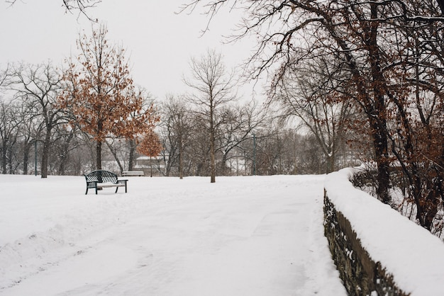Hermosa foto del parque cubierto de nieve en un frío día de invierno Foto gratis