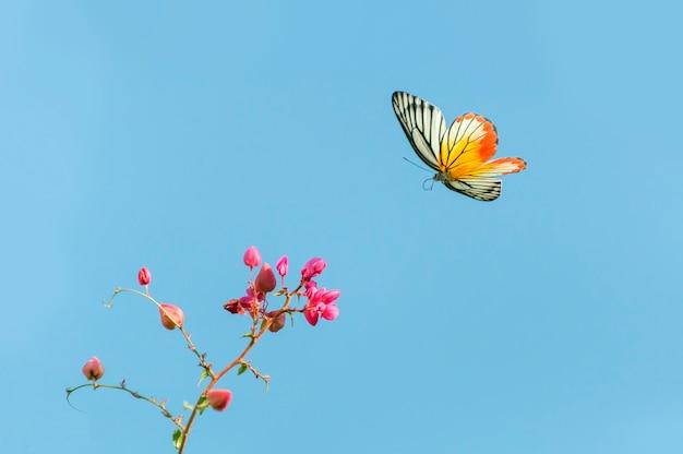 Hermosa mariposa volando y flores rosadas sobre fondo de cielo azul Foto Premium