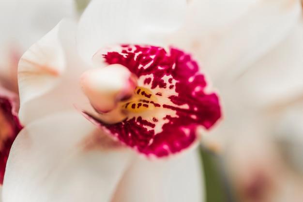 Hermosa orquidea fresca blanca Foto gratis