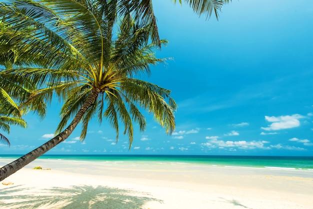 Hermosa playa tropical con palmera de coco, ubicada en la ...
