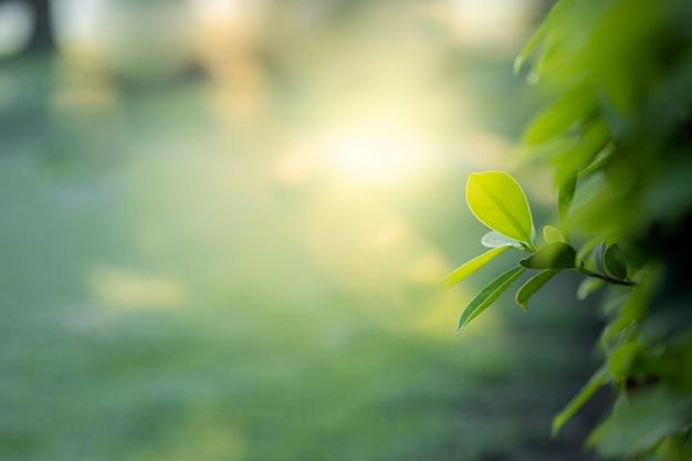 La hermosa vista del primer del verde de la naturaleza se va en fondo borroso del árbol del verdor con luz del sol en parque público del jardín. Foto Premium