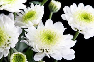 Hermosas Flores Blancas Descargar Fotos Gratis