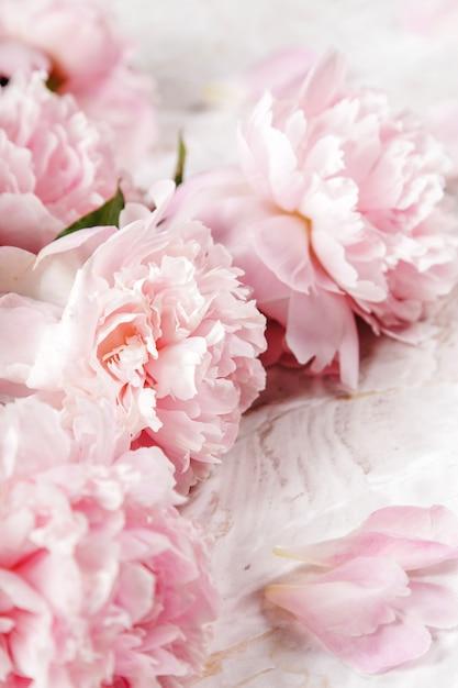 Hermosas flores frescas de peonía Foto gratis