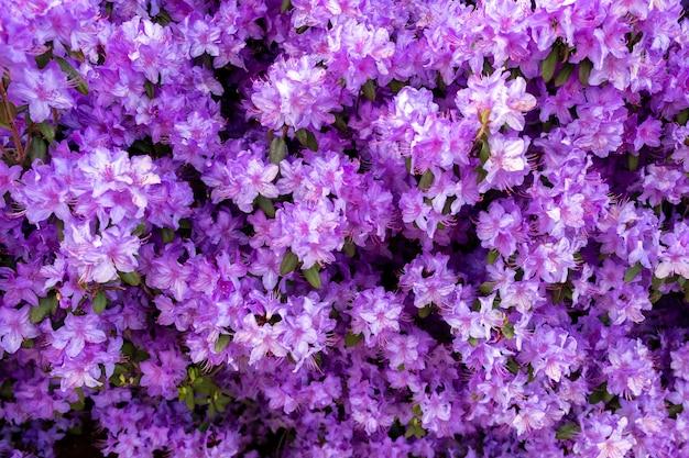 Hermosas flores pequeñas de color púrpura Foto gratis