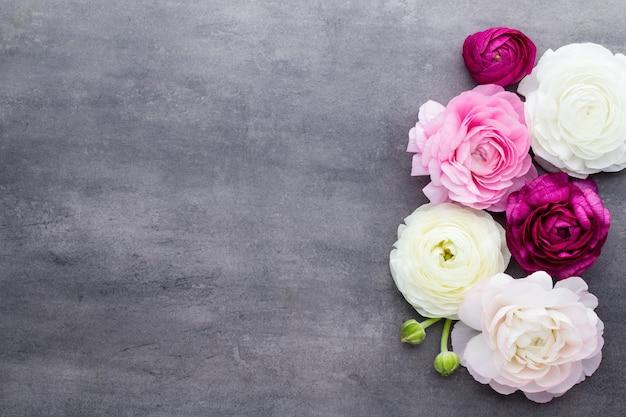 Hermosas flores de ranúnculo de colores sobre un fondo gris Foto Premium