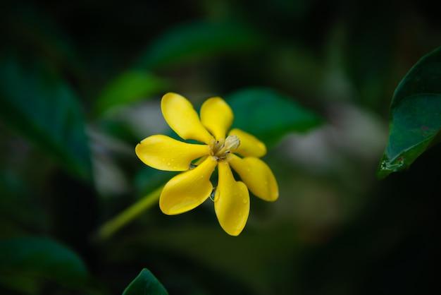 Hermosas Flores Silvestres Amarillas Descargar Fotos Premium