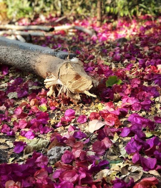 Hermosas hojas de color rosa caídas en el suelo durante la primavera ...