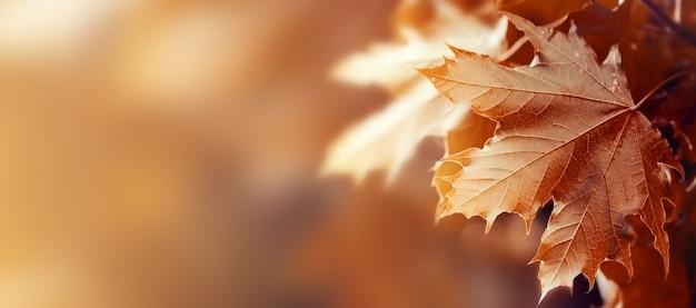 Hermosas hojas de otoño sobre fondo rojo de otoño soleado luz del día horizontal Foto gratis