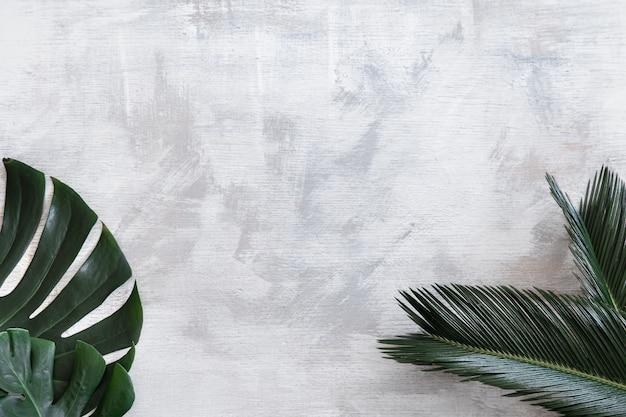 Hermosas hojas tropicales sobre un fondo blanco. banner de cartel, plantilla de tarjeta postal. Foto gratis
