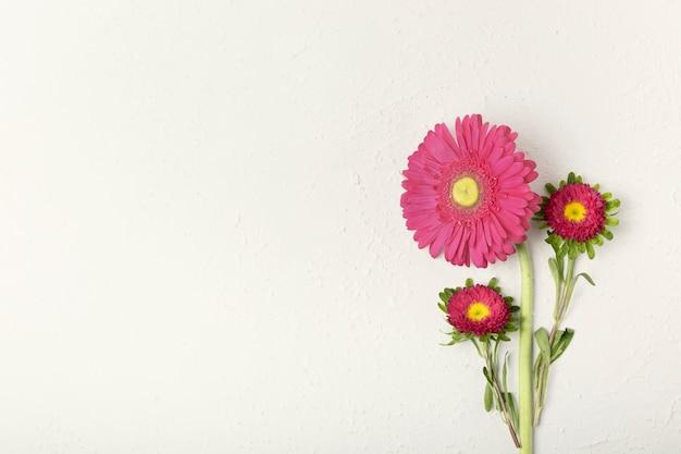 Hermosas margaritas florales con fondo blanco. Foto gratis