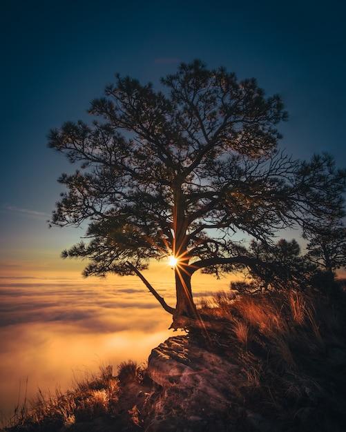 Hermoso árbol viejo crecido en el borde de una roca con nubes increíbles en el costado y la luz del sol Foto gratis