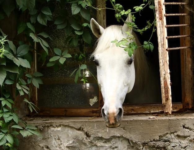 Hermoso caballo blanco Foto gratis