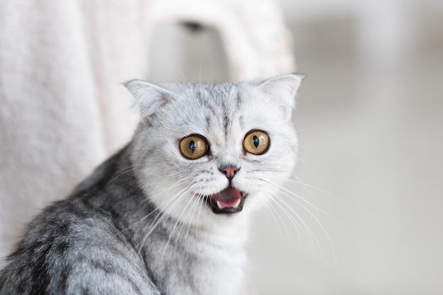 Hermoso gato atigrado gris con ojos amarillos se encuentra en el piso blanco Foto gratis
