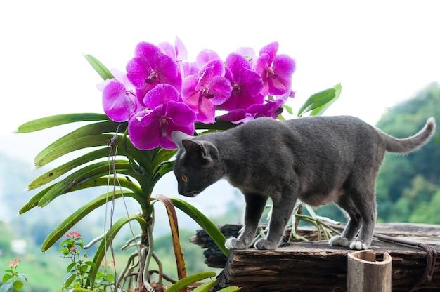 Hermoso gato gris y flores de orquídea púrpura Foto Premium