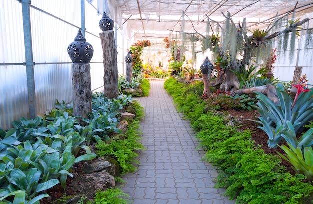 Hermoso jardín en invernadero Foto Premium