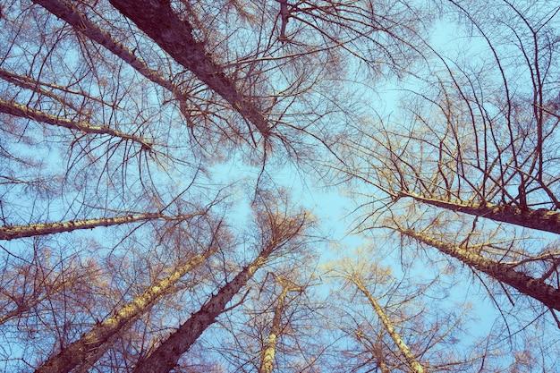 Hermoso paisaje de árbol de ángel bajo y rama con fondo de cielo Foto gratis