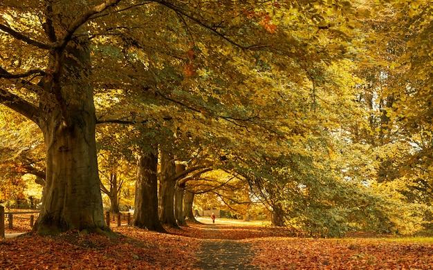 Hermoso paisaje de otoño en el parque con las hojas amarillas caídas en el suelo Foto gratis