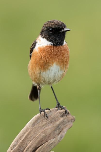 Hermoso pájaro salvaje en la naturaleza Foto Premium