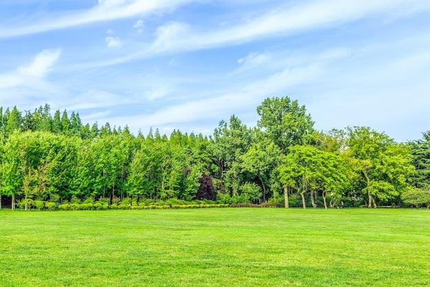 Hermoso parque Foto gratis