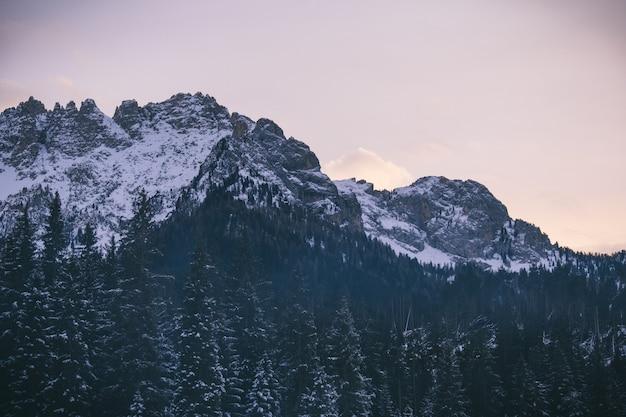 Hermoso tiro de árboles nevados cerca de las montañas nevadas con cielo despejado Foto gratis