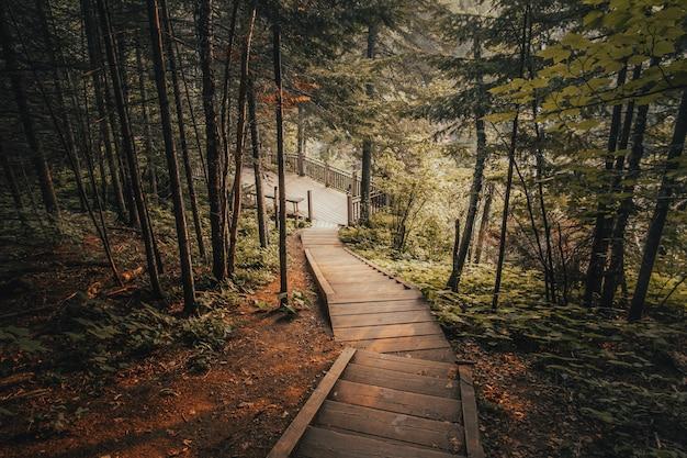 Hermoso tiro de escaleras de madera rodeadas de árboles en un bosque Foto gratis