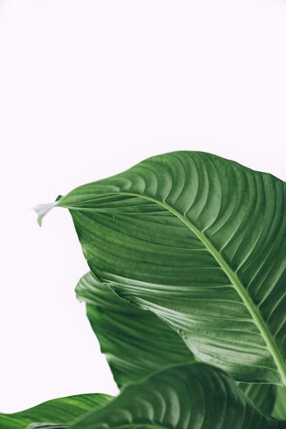 Hermoso tiro de exóticas hojas tropicales Foto gratis
