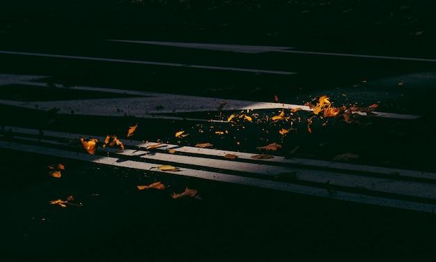 Hermoso tiro de hojas amarillas marchitas en la calle Foto gratis
