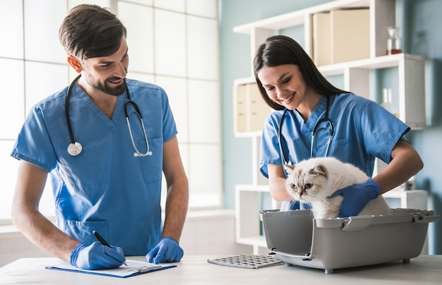 When to Get Male Kittens Neutered or Spayed - Everything You Should Know