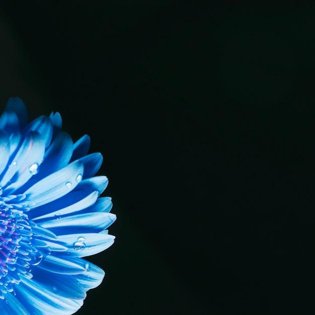 Hermosos pétalos de flores azules brillantes en rocío Foto gratis