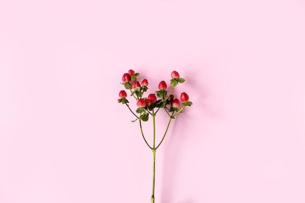 Hierba de san juan, hierba de san juan roja, frutos rojos en una rama sobre un fondo rosa Foto Premium