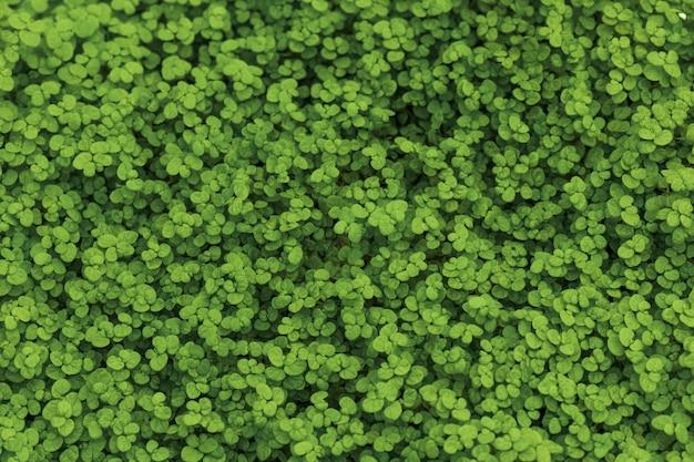 Hierba verde en el suelo Foto gratis
