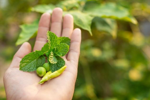 Hierbas colocadas en las manos. Foto gratis