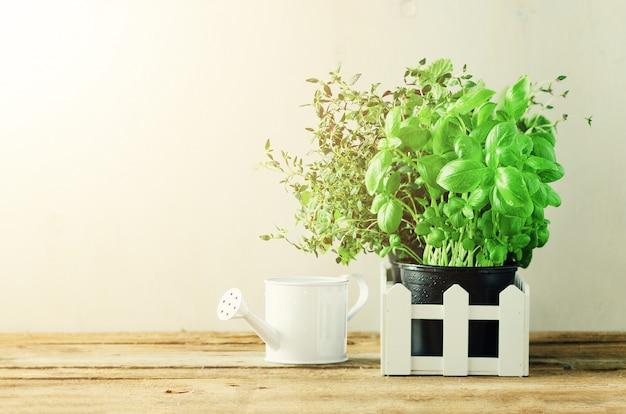 Hierbas verdes orgánicas (melissa, menta, tomillo, albahaca, perejil) en macetas y cerca blanca. verano, primavera de fondo con fugas soleadas. Foto Premium