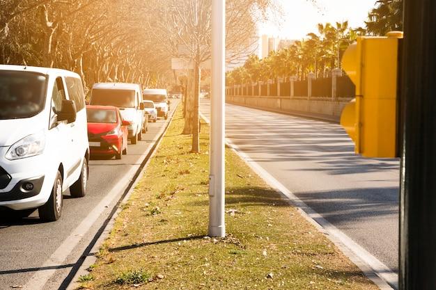 Hilera de árboles y vehículos en calle. Foto gratis