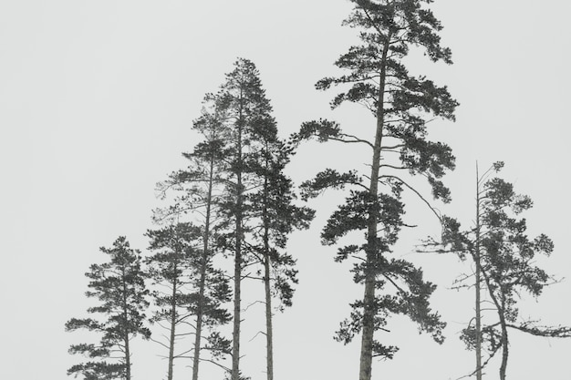 Arbol de hoja perenne fotos y vectores gratis for Ver fotos de arboles de hoja perenne