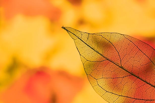 Hoja de otoño naranja transparente vívida Foto gratis