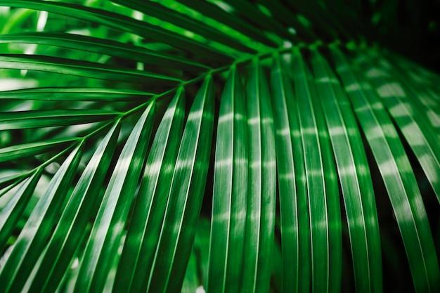 Hoja de palma tropical verde con fondo de la luz del sol Foto Premium