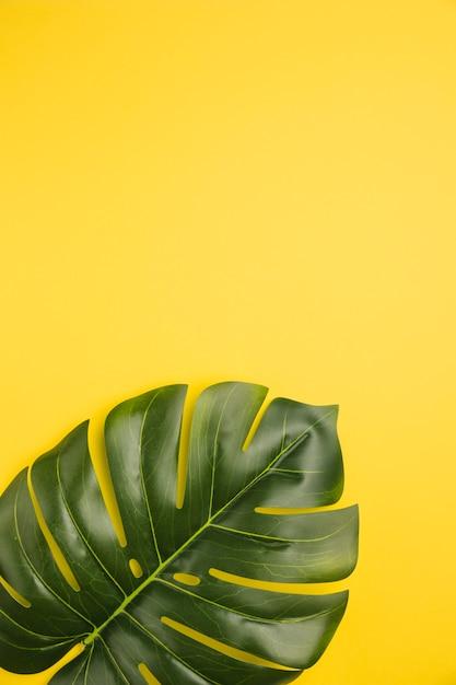 Hoja de palmera sobre fondo naranja Foto gratis