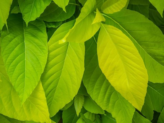 Hoja verde en el árbol para el fondo Foto Premium