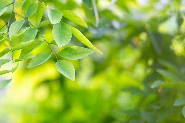 Hoja verde en el bosque. Foto gratis