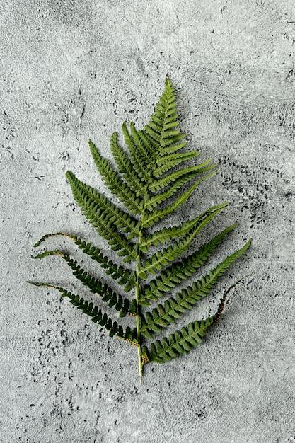 Hoja verde de helecho sobre fondo de hormigón Foto gratis