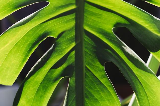 Hoja verde simétrica | Descargar Fotos gratis