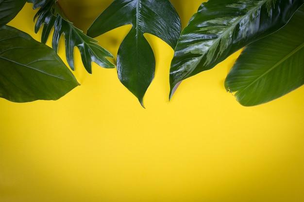 Fondo De Pantalla Selva: Hoja Verde Tropical En Diseño De Fondo Amarillo Para El