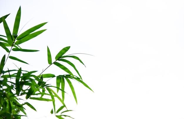 Hojas de bambú en el fondo blanco Foto Premium