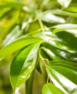 Hojas de color verde verde descargar fotos gratis - Color verde hoja ...