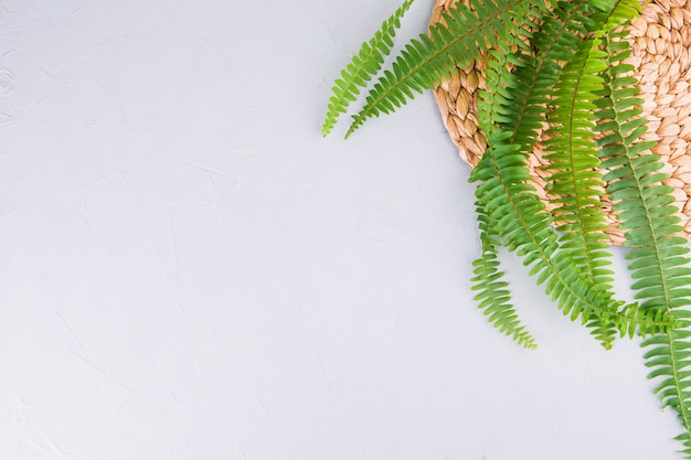 Hojas de helecho verde en mesa blanca Foto gratis