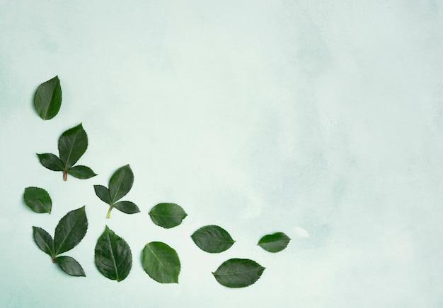 Hojas minimalistas con espacio de copia. Foto gratis