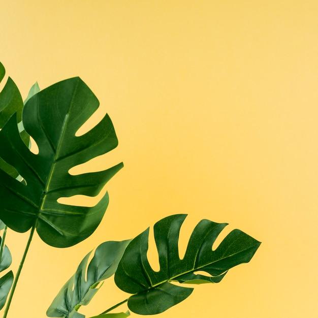 Hojas de monstera artificial contra fondo amarillo. Foto gratis